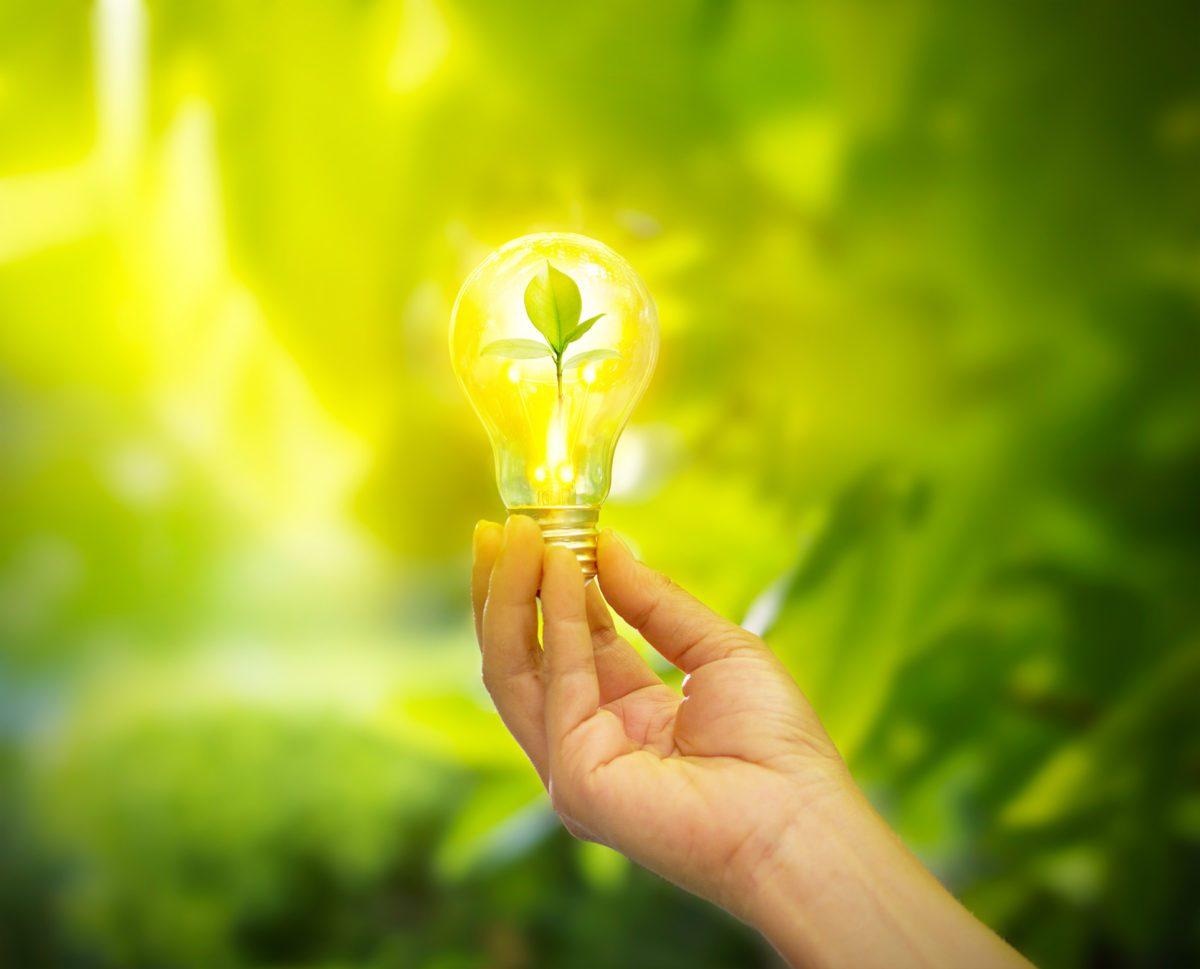 hand holding light bulb with energy, fresh green leaves inside